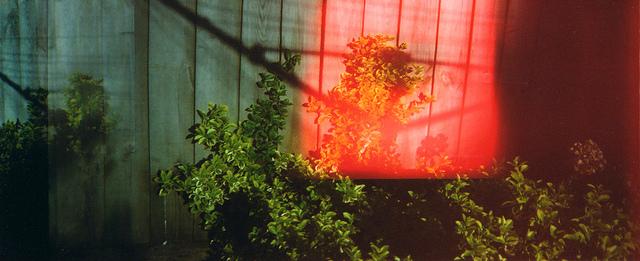 garden light leak