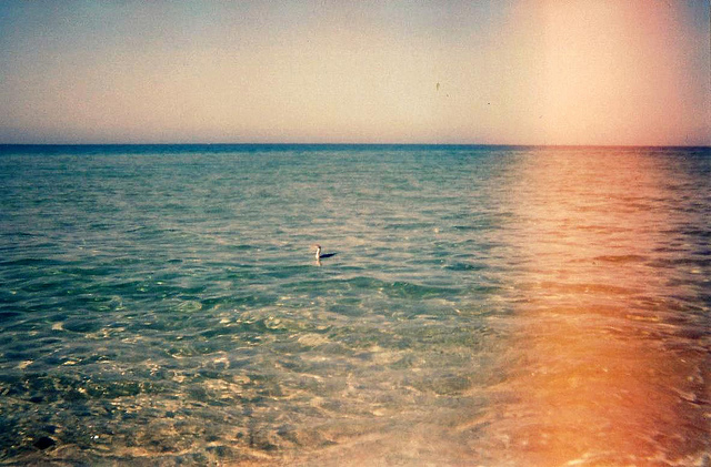 vintage ocean photo