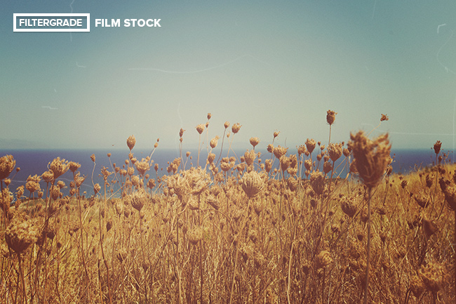 FilmStock-Full-Preview-4
