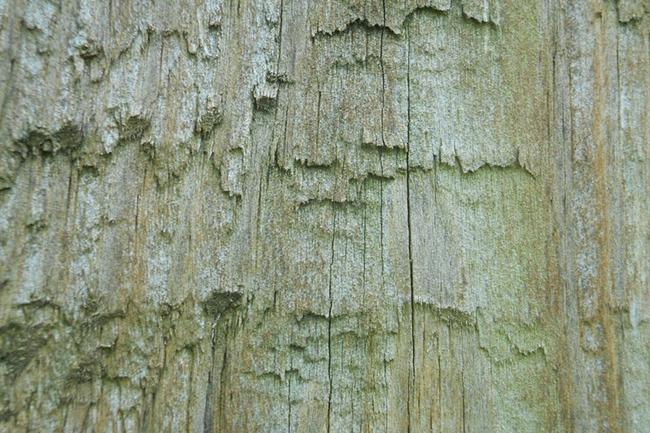 wooden grain textures