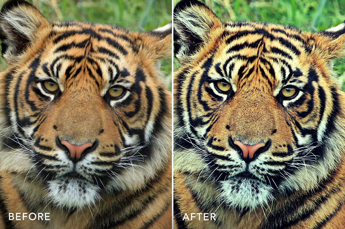 professional hdr photoshop actions