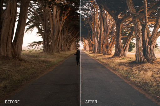 golden lightroom presets by jake dockins