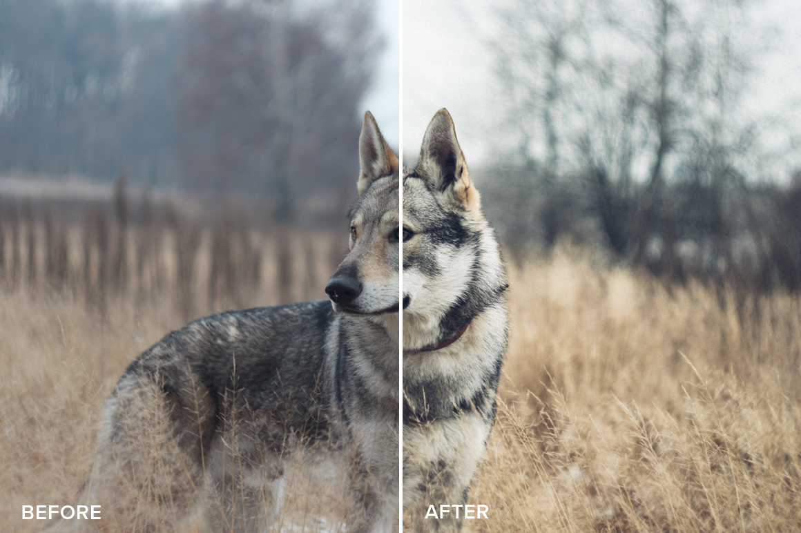 wildlife photography lightroom presets
