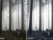 moody fog lightroom presets
