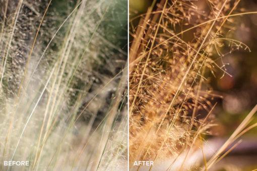 fringe of gold lightroom presets collection