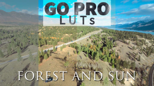 neumann films forest and sun gopro hero luts