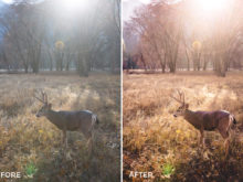 vancity wild editing style for nature photos
