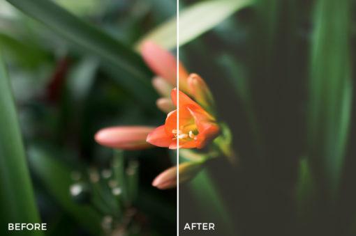 1 Blake Lisk Lightroom Presets - FilterGrade Marketplace