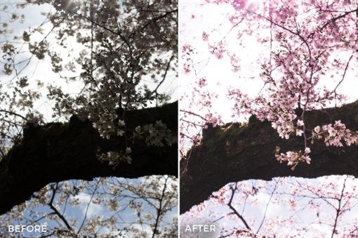 6 Alexander Zhuk Spring & Sakura Lightroom Presets - FilterGrade Marketplace