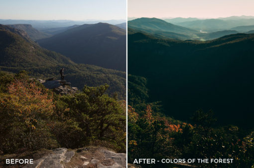 Colors of the Forest - Kal Visuals Landscape Lightroom Presets II - FilterGrade