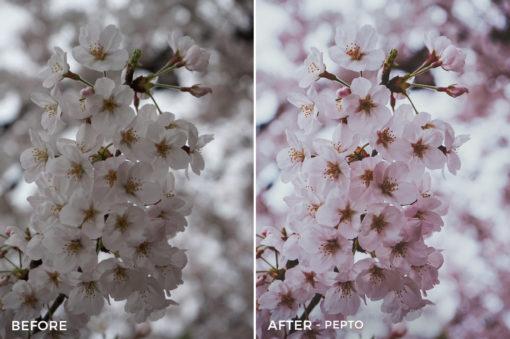 Pepto - Dylan Sanfilippo Lightroom Presets - FilterGrade