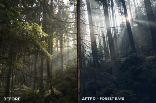 Forest Rays - Kopernikk Lightroom Presets - FilterGrade