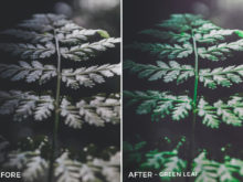 *Green Leaf - Adventure Series - True North Capture One Styles by Mark Binks - FilterGrade