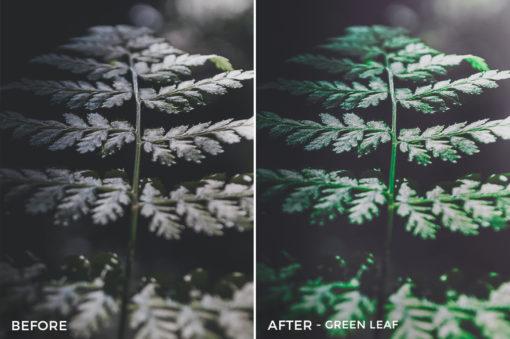 *Green Leaf - Adventure Series - True North Capture One Styles by Mark Binks - FilterGrade