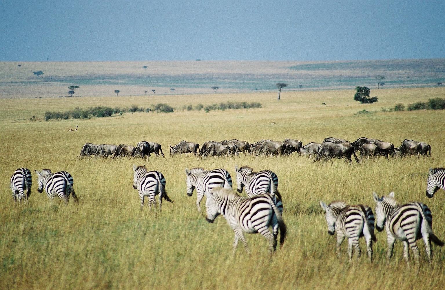 photography-destinations-Maasai-Mara-National-Reserve-Kenya