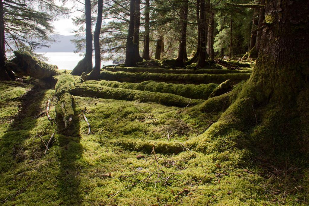 photography-destinations-haida-gwaii-british-columbia