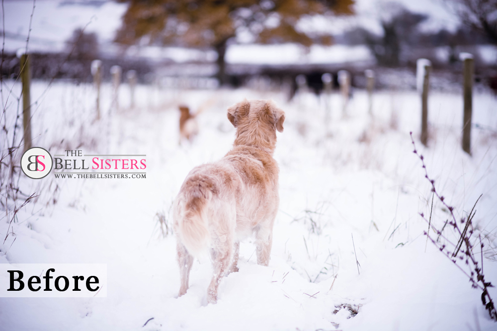10 Featured - The Bell Sisters Snow Textures Pack - FilterGrade