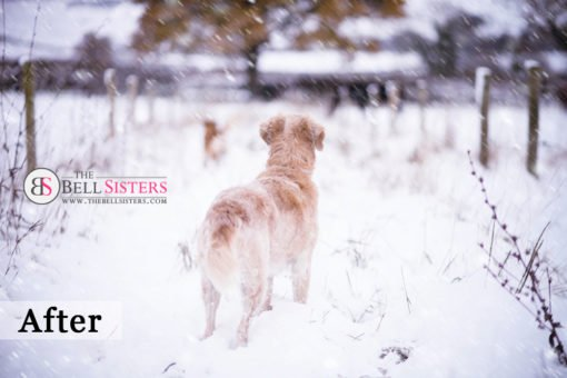 5 Featured - The Bell Sisters Snow Textures Pack - FilterGrade