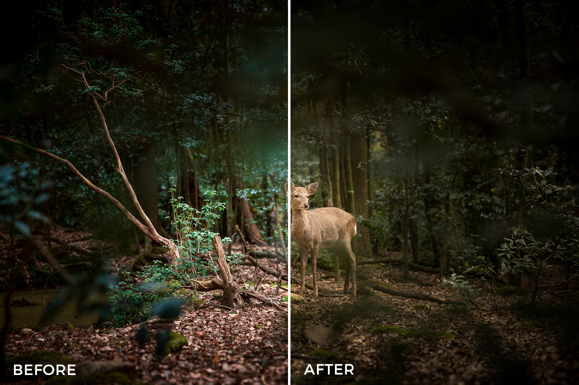 1 Nick Asphodel Lightroom Presets Mega Universal Bundle - FilterGrade