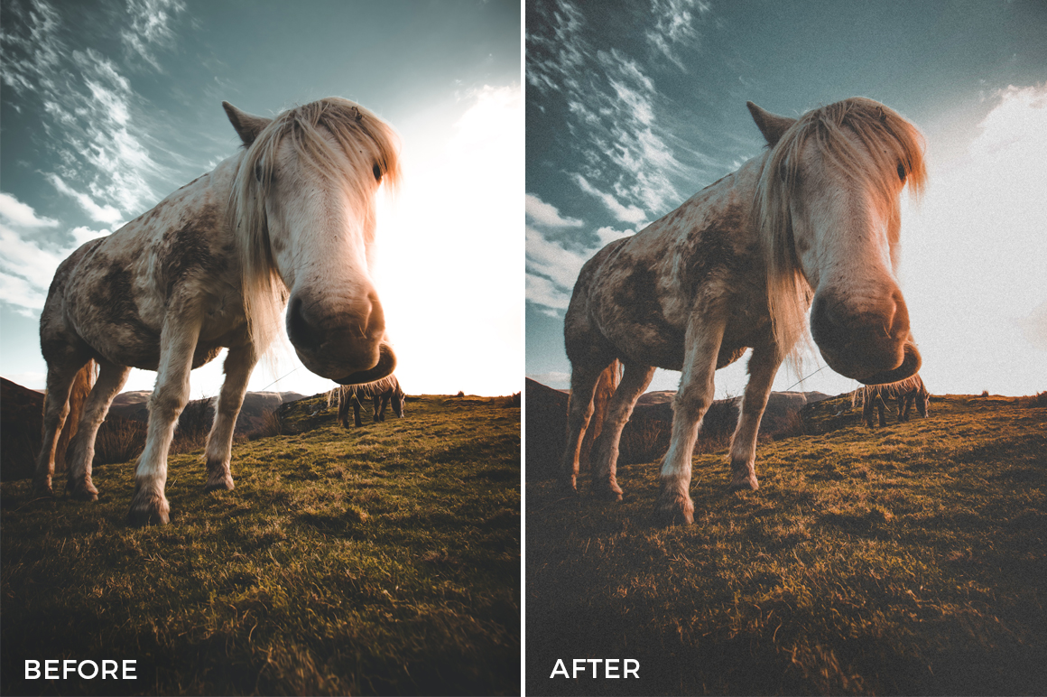 12 Nick Asphodel Film Lightroom Presets - FilterGrade