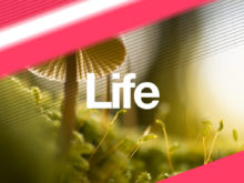 lifestyle after effects slideshow builder