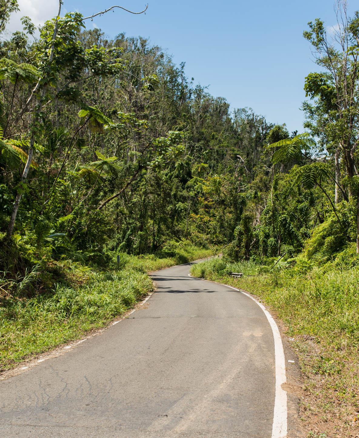 leaving the el yunque rainforest