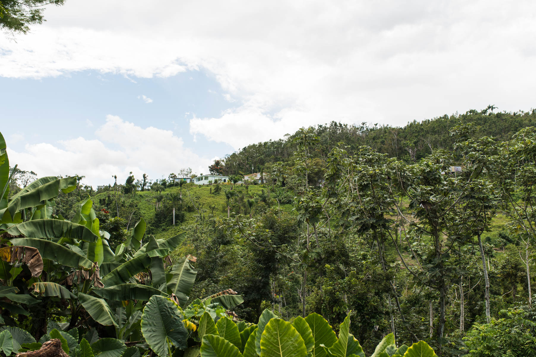 el yunque views