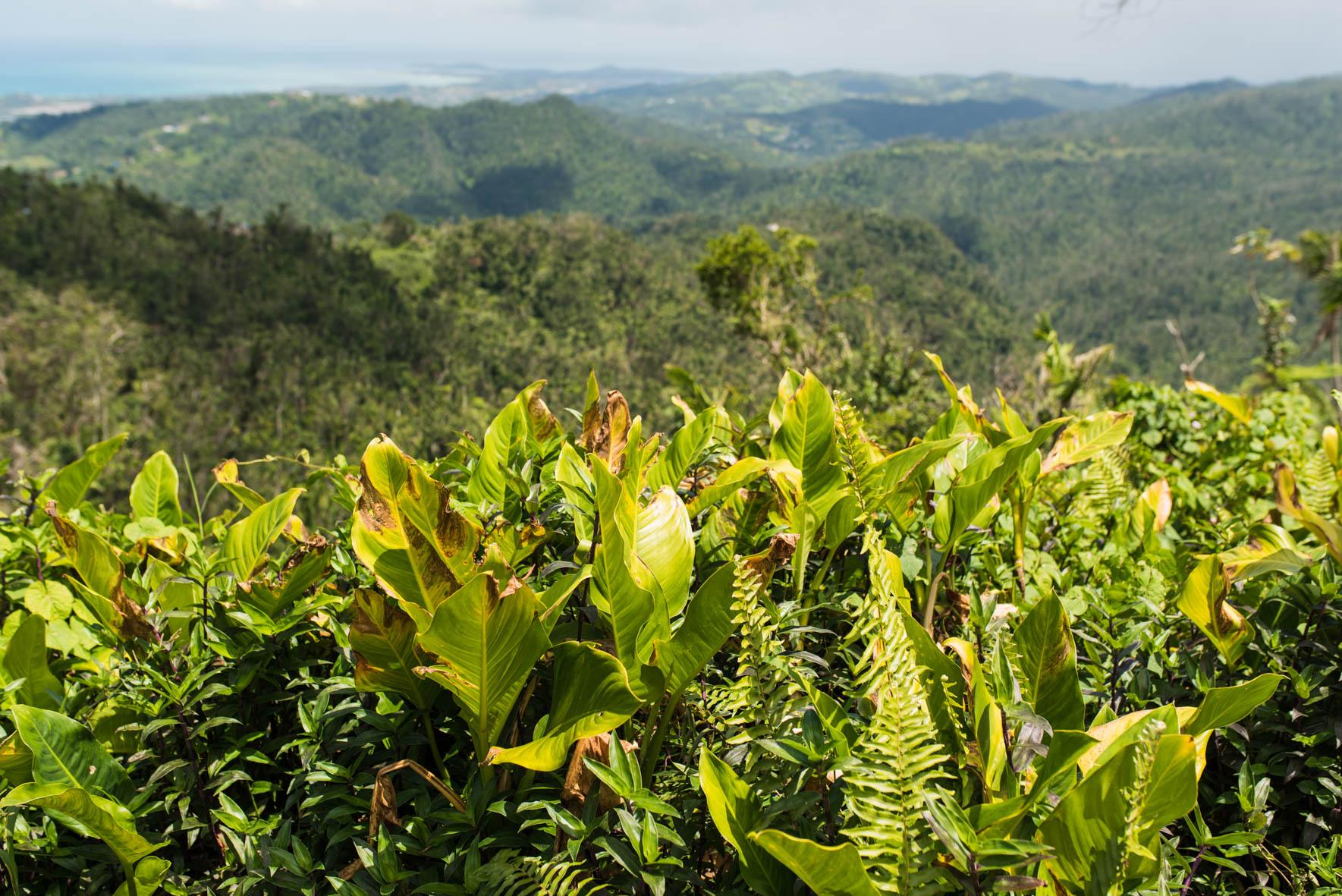 puerto rico tropical rainforest
