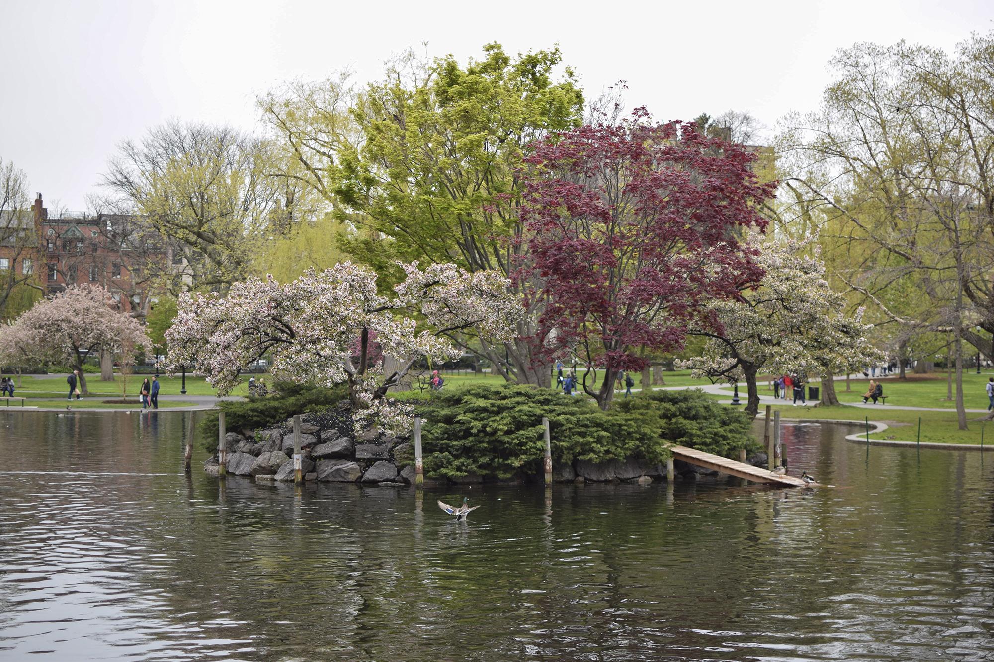 1 Boston Commons - 8 Fun Things to Do in Boston - FilterGrade