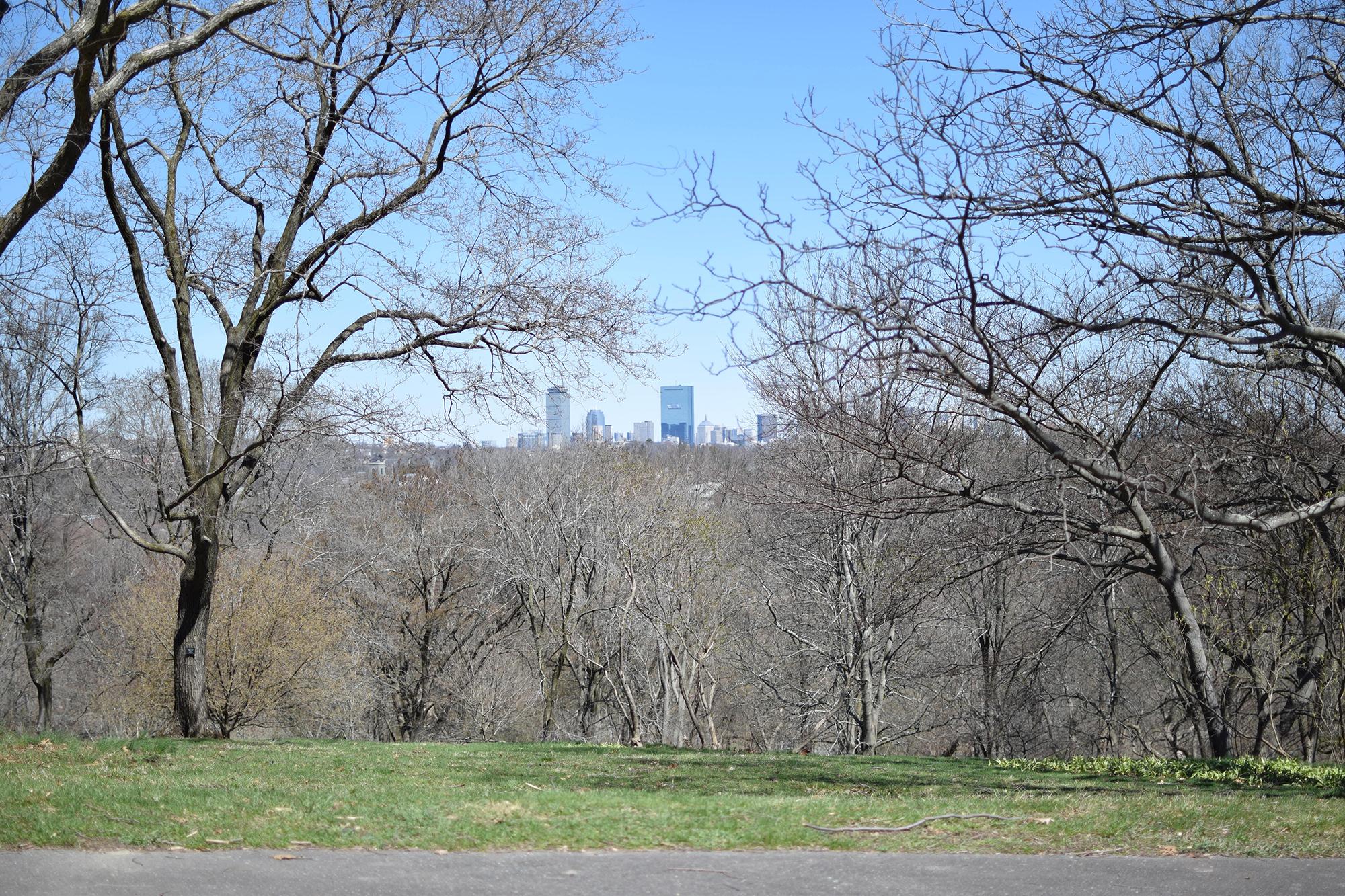 Arnold Arboretum - 8 Fun Things to Do in Boston - FilterGrade
