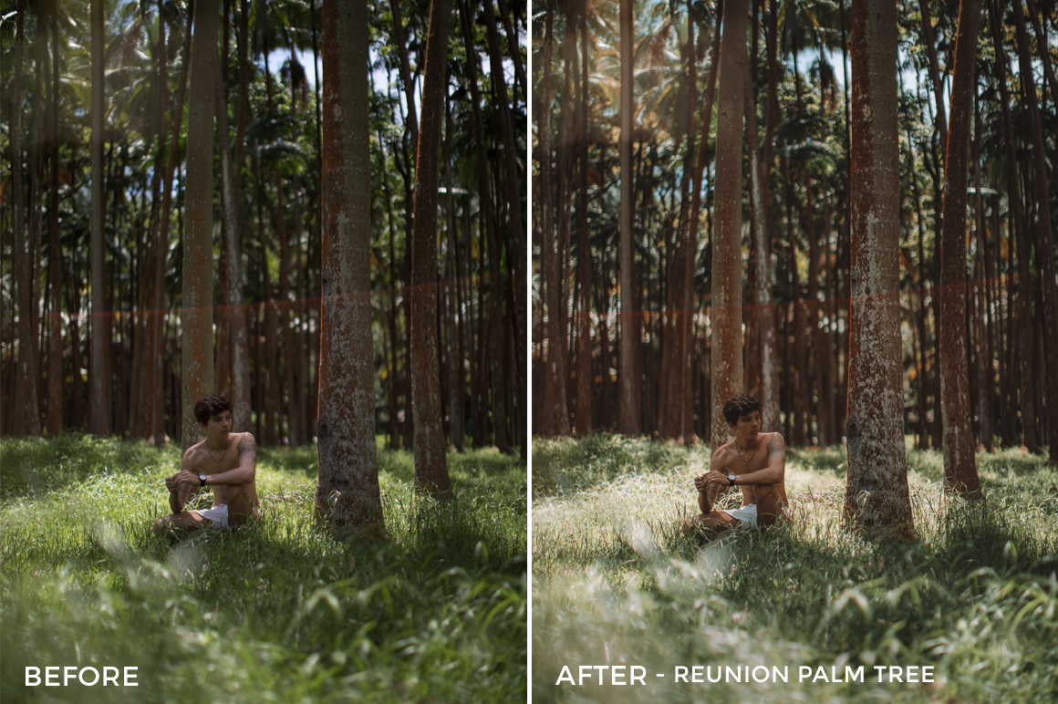 Reunion Palm Tree - Alex Tritz Lightroom Presets Volume 3 - FilterGrade