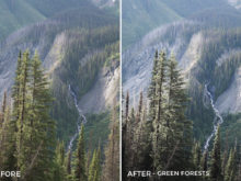 Green Forests - Catherine Simard Lightroom Presets - FilterGrade