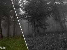 Forest - The FilterGrade Agency Lightroom Presets Bundle - FilterGrade