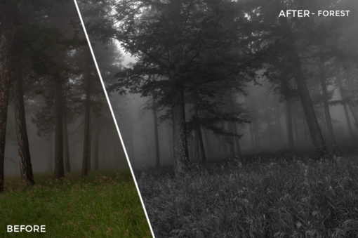 Forest - The FilterGrade Agency Lightroom Presets Bundle - FilterGrade