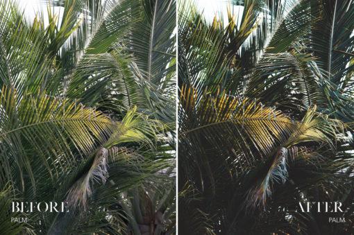 Palm - Joshua Fuller Lightroom Presets Vol. 5 Dubai - FilterGrade