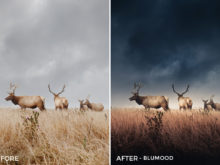Blumood- GrafixArt Lightroom Presets - FilterGrade