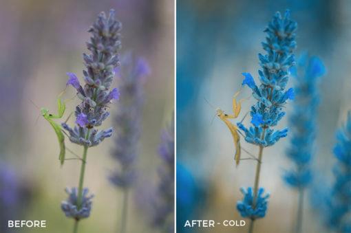 Cold-Jeferson-Castellari-Lightroom-Presets-FilterGrade