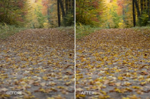 fall and autumn foliage preset