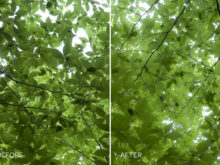 faded forest lightroom preset