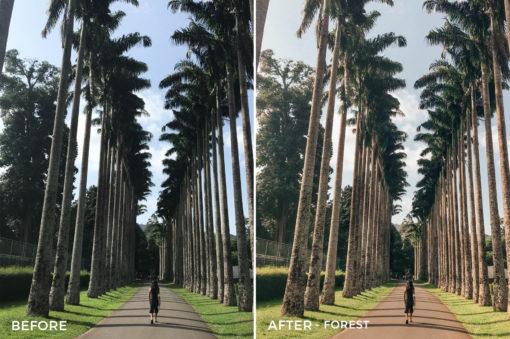 Forest-Stephanie-Lee-Lightroom-Presets-FilterGrade