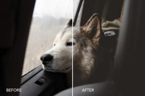 Loki the Wolfdog photography
