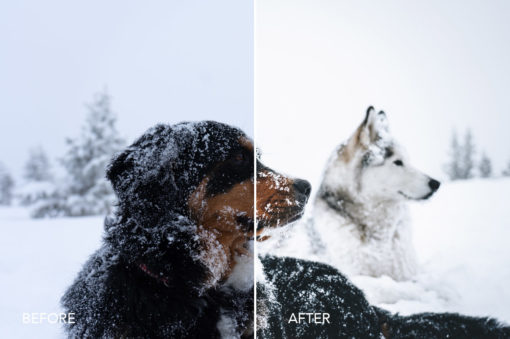 wolves in the wind winter preset