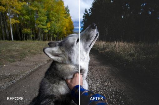 @loki the wolfdog instagram