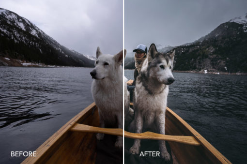 wolves in the wind presets
