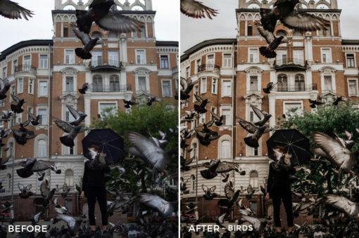 Birds-Vladimir-Tashlanov-Lightroom-Presets-FilterGrade