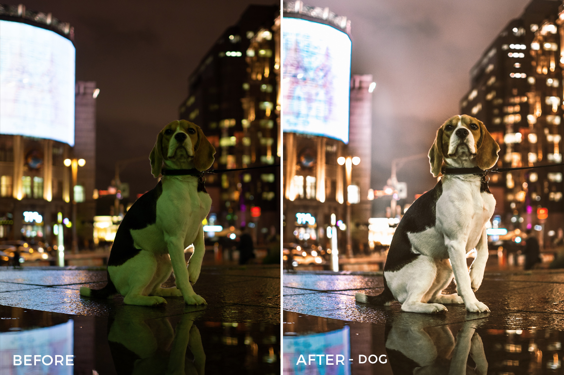 Dog-Vladimir-Tashlanov-Lightroom-Presets-FilterGrade