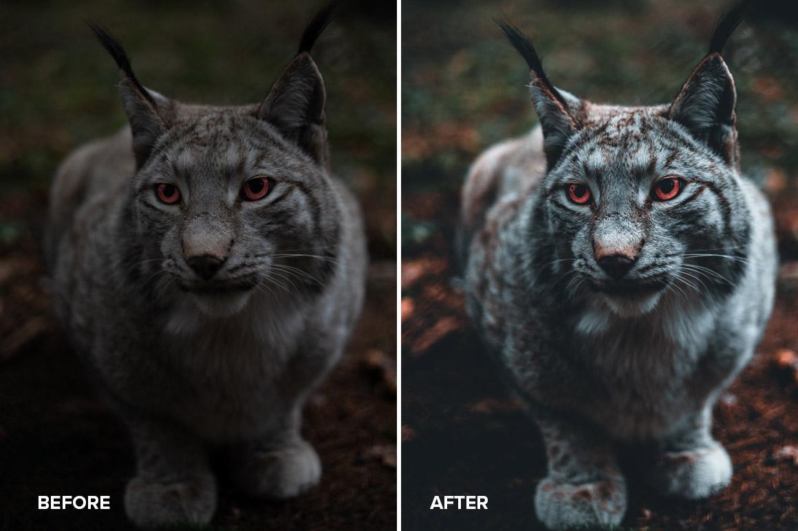 animal photography editing