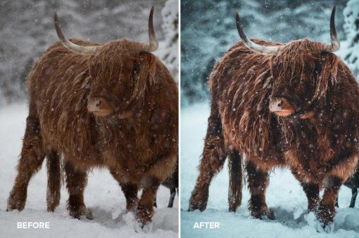 moody snowy animal photography @daniel_weissenhorn