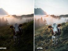 animal photos germany