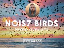 1 Nois7 Birds Photo Overlays - FilterGrade